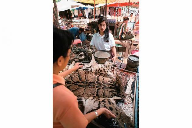 Wildlife Trade, Illegal