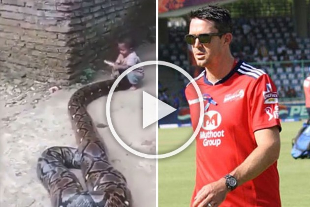 ICC Cricket World Cup 2019: What On Earth! Kevin Pietersen Shares Bizarre Snake Video – WATCH