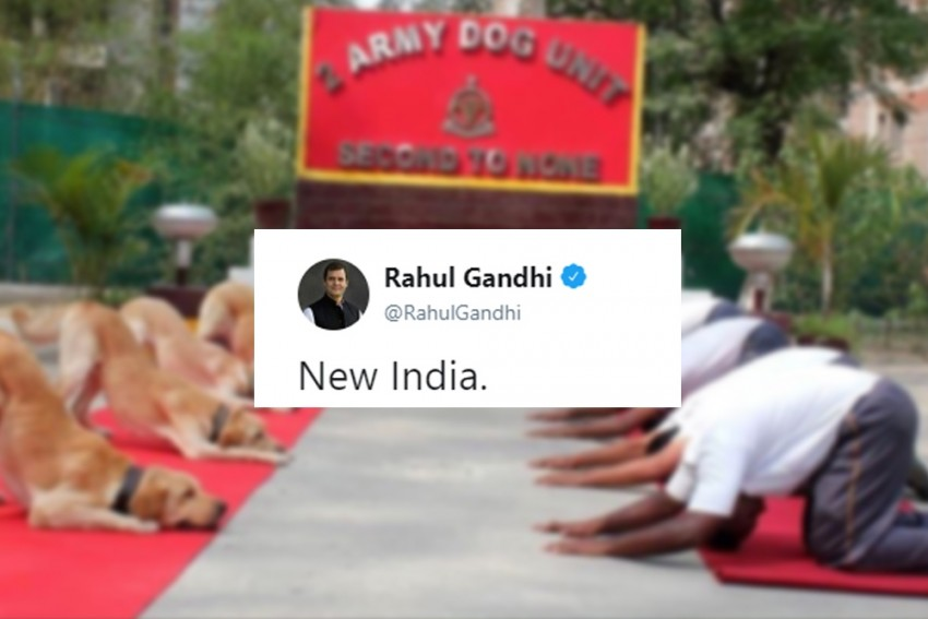 'Life Is One Continuing Joke For Him': Rahul Gandhi Trolled For Yoga Day Tweet On Army Dogs