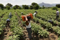 Budget 2019-20: Will It Lay Roadmap To Doubling Farmers' Income?