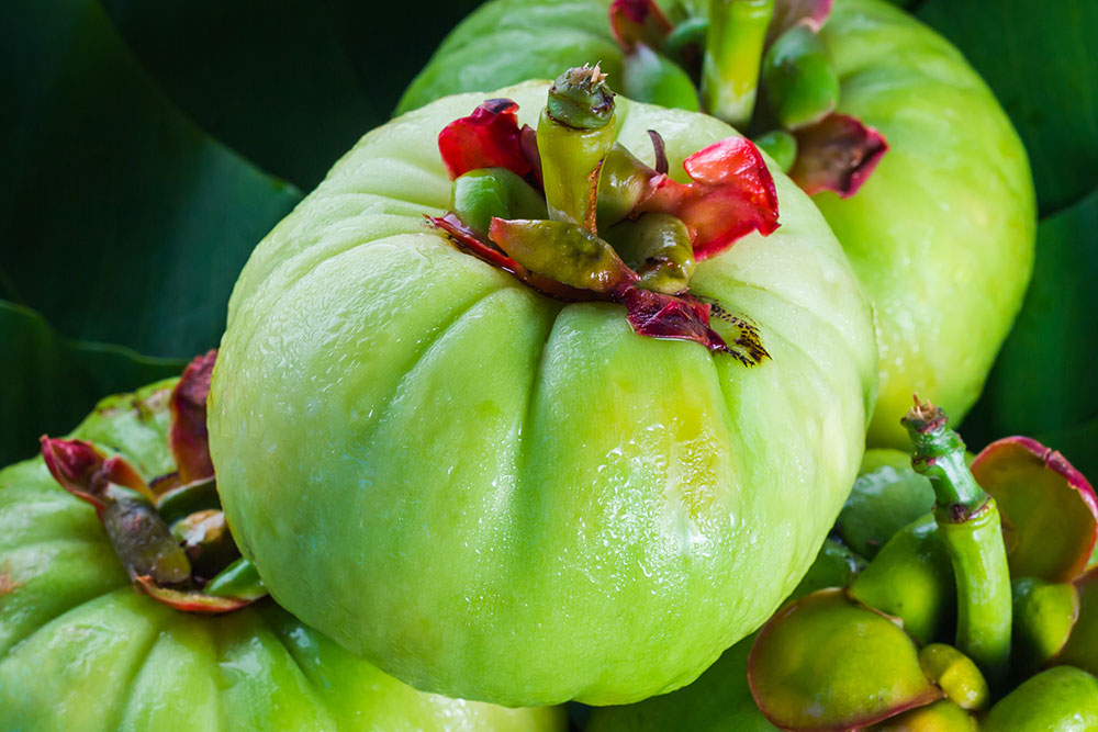 Nutrition Tips For You What Is Garcinia Cambogia Is It Good For