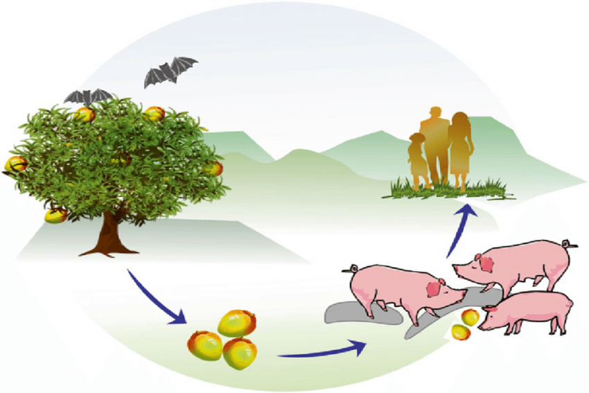 What Is Nipah Virus? Can It Be Cured?