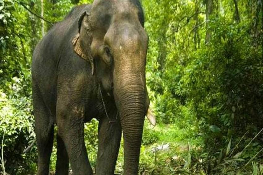 Three Elephants Die Of Electrocution in West Bengal's Jhargram