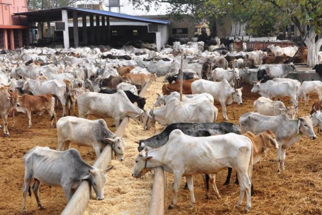 8 Officials Suspended In UP After Cows Found Dead At Cattle Shelters