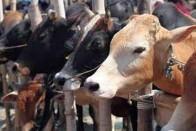 Three Men Lynched In Bihar Village On Suspicion Of Cattle Theft