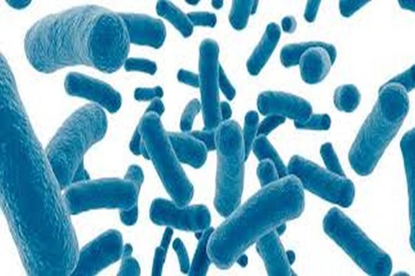 Consuming This Bacteria May Cut Heart Disease Risk: Study