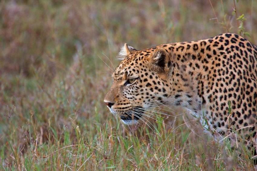 Uttarakhand: Leopard Hiding In Medical College Building Since Two Days Shot Dead