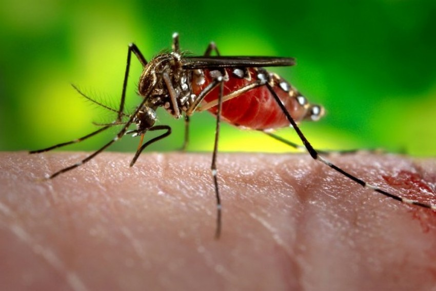 Acute Encephalitis Syndrome Claims 214  Lives This Year In Assam