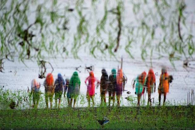 Rice In Deep Water! Why Green Revolution Is Facing Watery Death In Haryana
