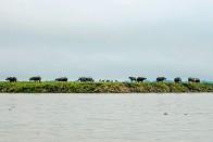 Kaziranga Loves A Good Flood