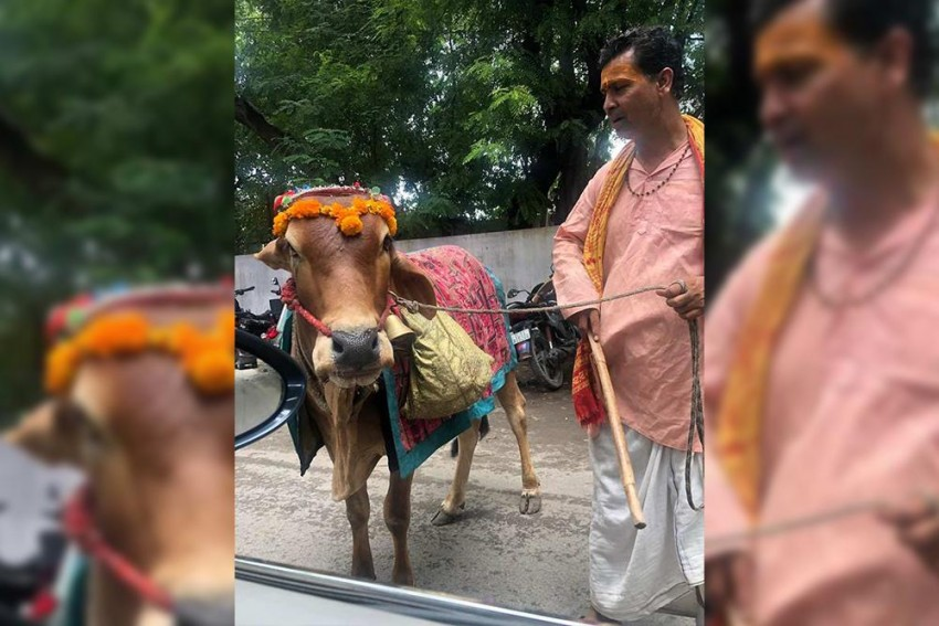 Robert Vadra Shares Video On Facebook, Writes 'Know Your Future From Sacred Cow'