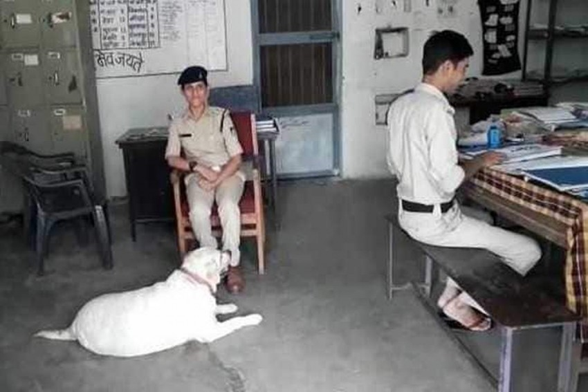 After Owners Were Jailed For Murder, Madhya Pradesh Police Pets Their Dog