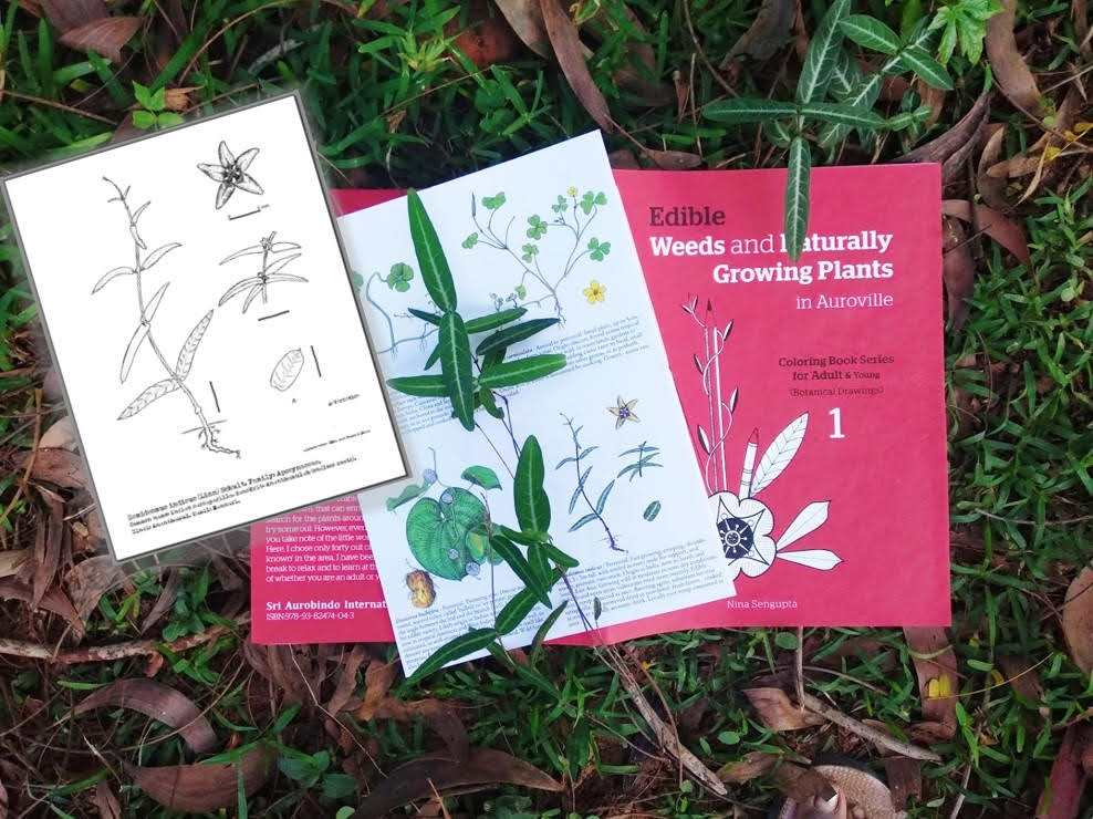 Why I Made My First Colouring Book For Adults On Edible Weeds