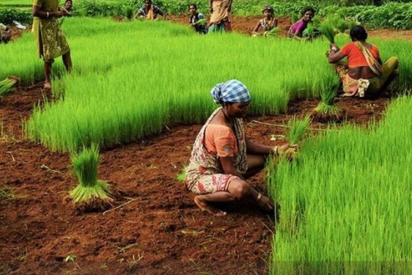 Economic Survey Stresses On Organic Farming, Better Irrigation And Linkages To Revamp Agriculture