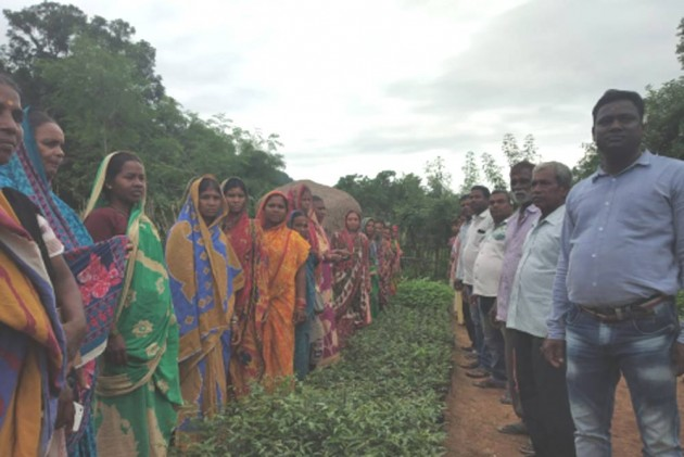 'Become Our Tree Brothers': Odisha Women Gift Saplings To Brahmagiri  Villagers To Rebuild Green Cover