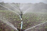 Water Use Efficiency Through Micro Irrigation In India: The Way Forward