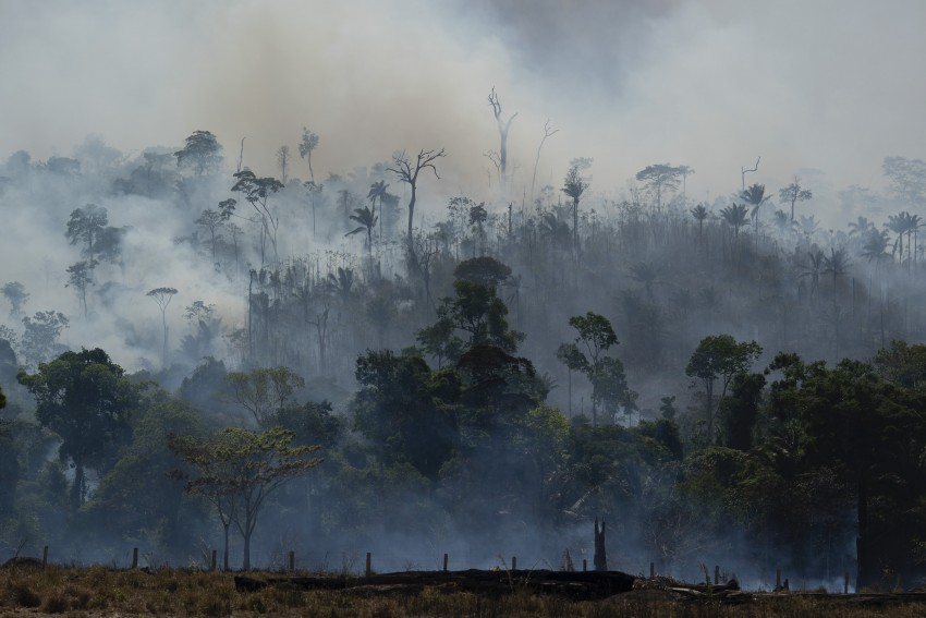 Stop Companies From Setting Fire To The Amazon