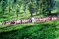 Nutrition Warriors   Prasanth Nair's Masterstroke That Arrested Hunger In A Wayanad Tea Estate