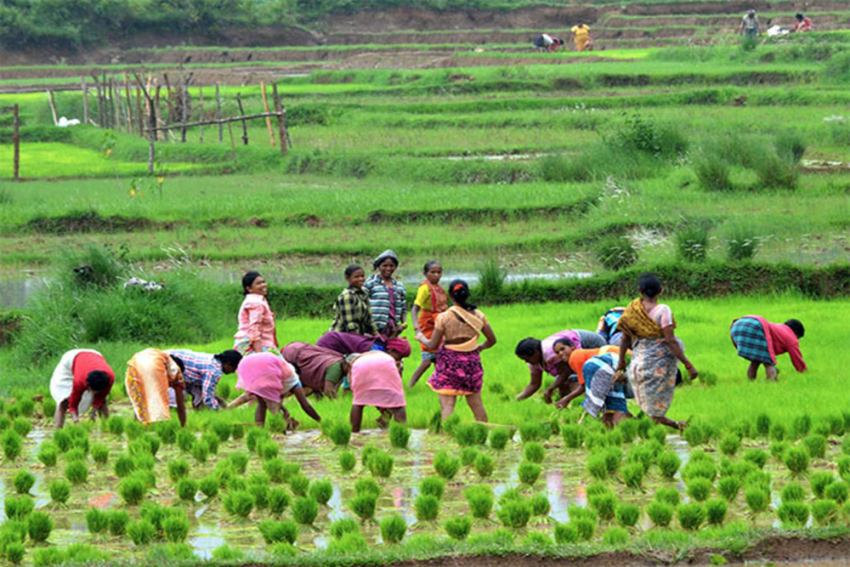 Why It's Essential To Empower Women Farmers In Agribusiness Value Chains