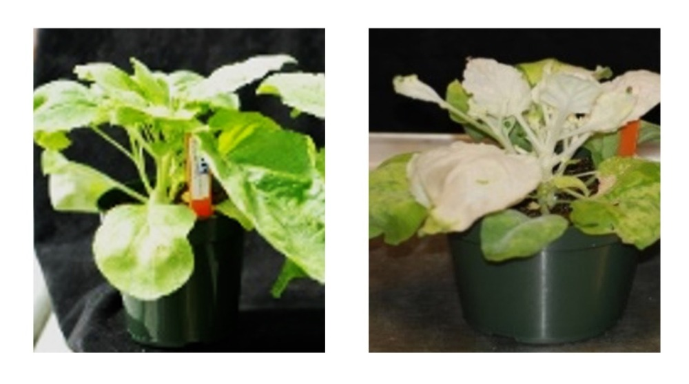 A Plant's Pathology, Physiology And Productivity