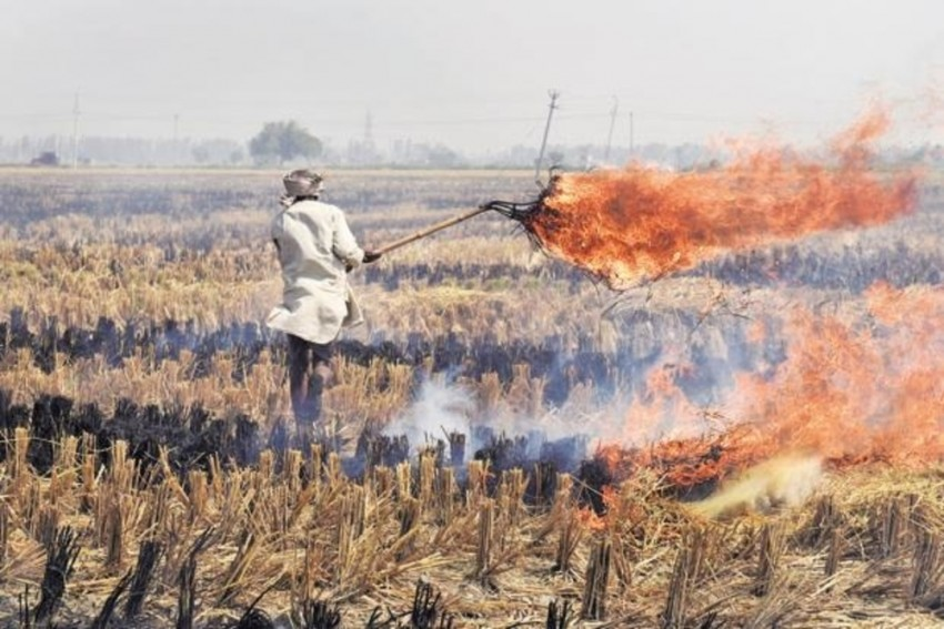 Turn Stubble To Fodder: Himachal Varsity's Solution To Ease Air Pollution