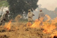 Stubble Burning Share In Delhi's Pollution Rise To 36%
