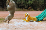 YouTuber Pranks Animals With Stuffed Tiger Toy; Viral Videos Show Their Reactions
