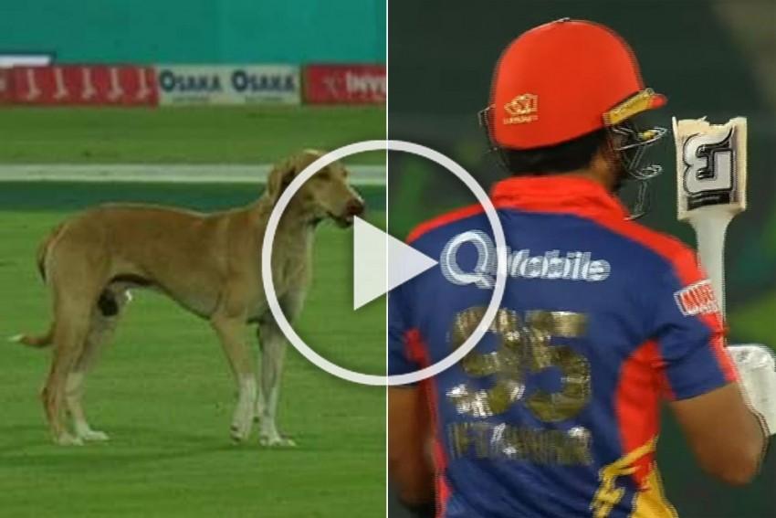 PSL 2020 Playoff: Broken Bat And Super Over, But Dog Steals The Show In Karachi - VIDEO