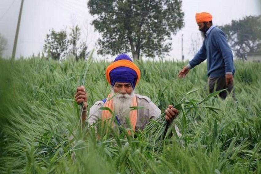 Punjab Records Highest Stubble Burning Cases; Anger Over Farm Bills Major Reason