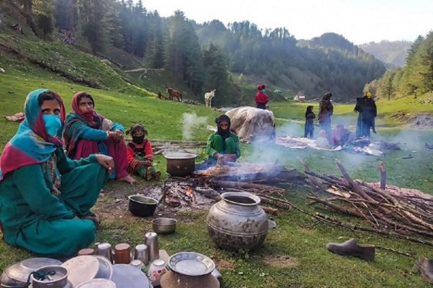 Under Scanner For Anti-Nomad Policies, Kashmir Govt To Implement Forest Rights Act