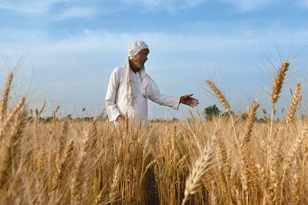 Green to Evergreen Revolution The Battleground Of Agriculture