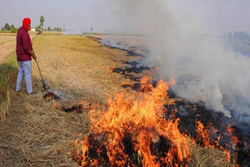 Punjab Sees Steep Rise In Stubble Burning This Year, Downward Trend In Haryana