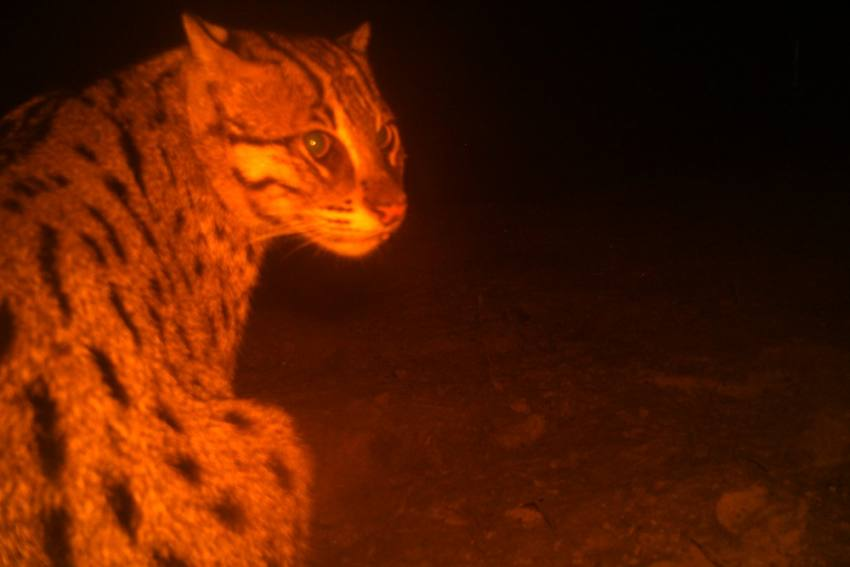 Chilika's Cat Fishes In Troubled Waters