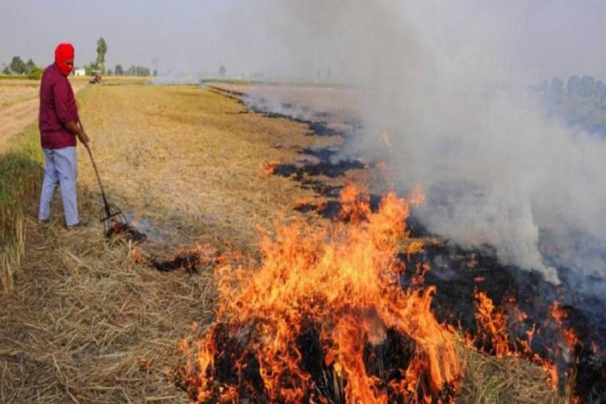Instances Of Stubble Burning Spiked By More Than 20 Percent This Year: Officials