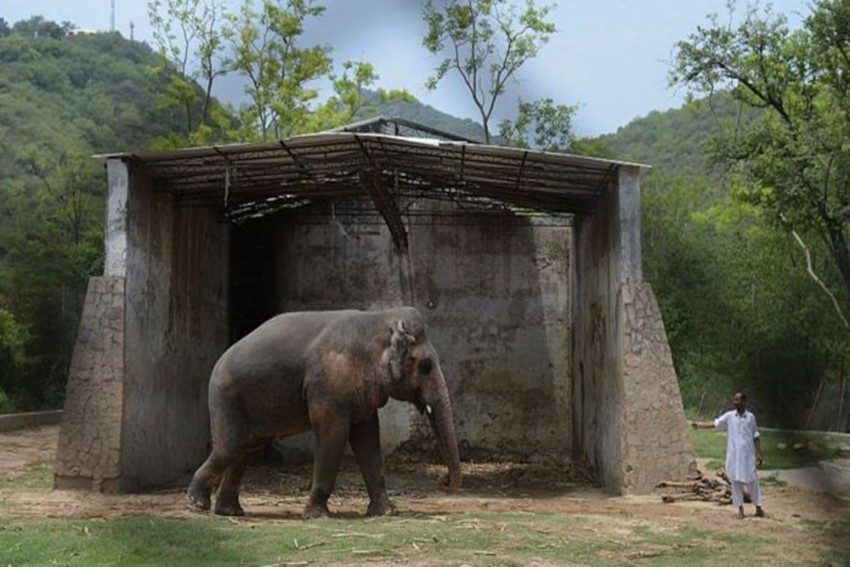 World's 'Loneliest Elephant' Arrives Safely In Cambodia