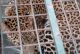 Leopard Enters Girls' Hostel, Residents Mistake It For Piece Of Cloth