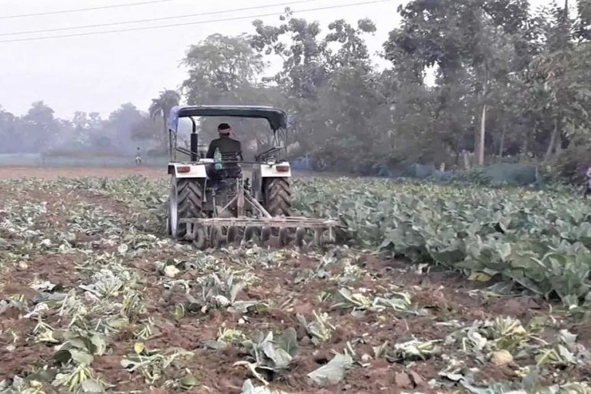 Angry Farmer Destroys Crop After Getting Just 75 Paisa/Kg; Others Dump Tomatoes, Muskmelons