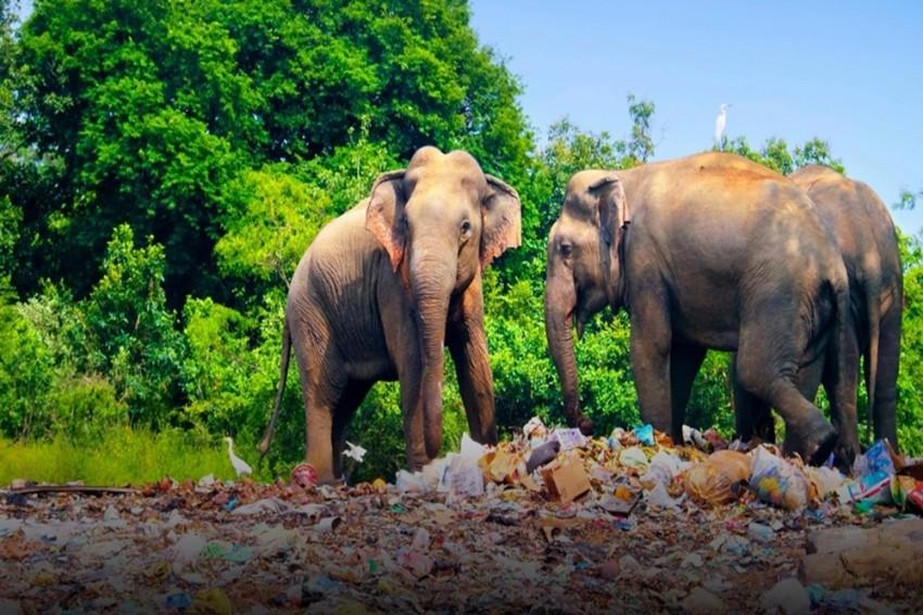 World Will Witness 90% Wildlife Loss By 2050 Due To Food Habits
