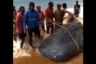 Watch: How These Kind Kerala Fishermen Freed The Giant Whale