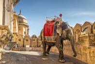 Rajasthan CM Announces Rs 4.2 Cr Relief For Elephants And Caretakers