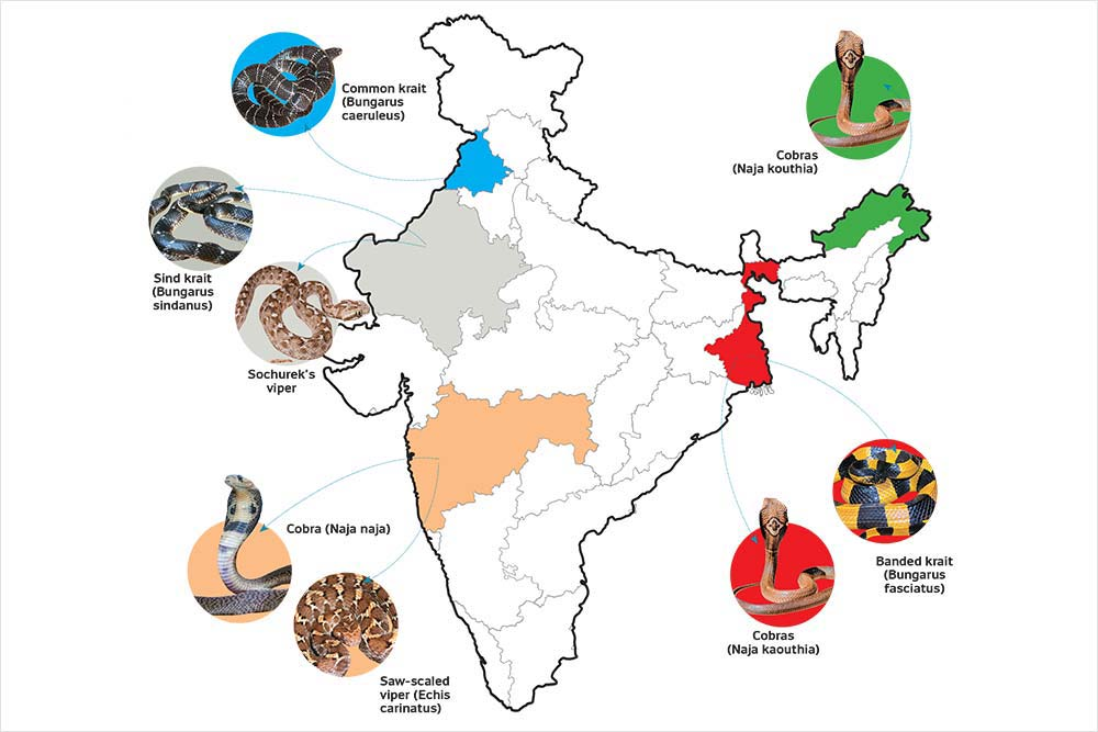 46,000 Deaths Per Year And Increasing, Why Snakebite Remains A Neglected Problem