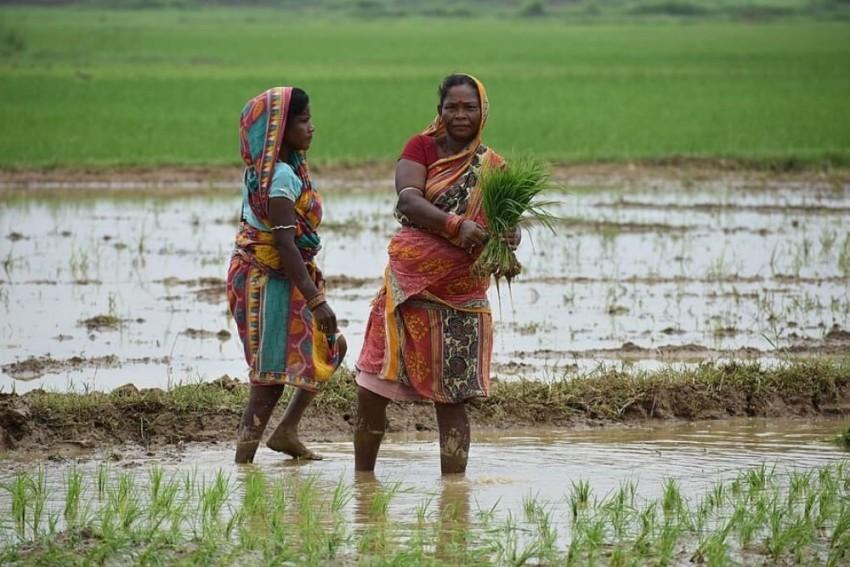 Odisha Leads Way With Climate Budget