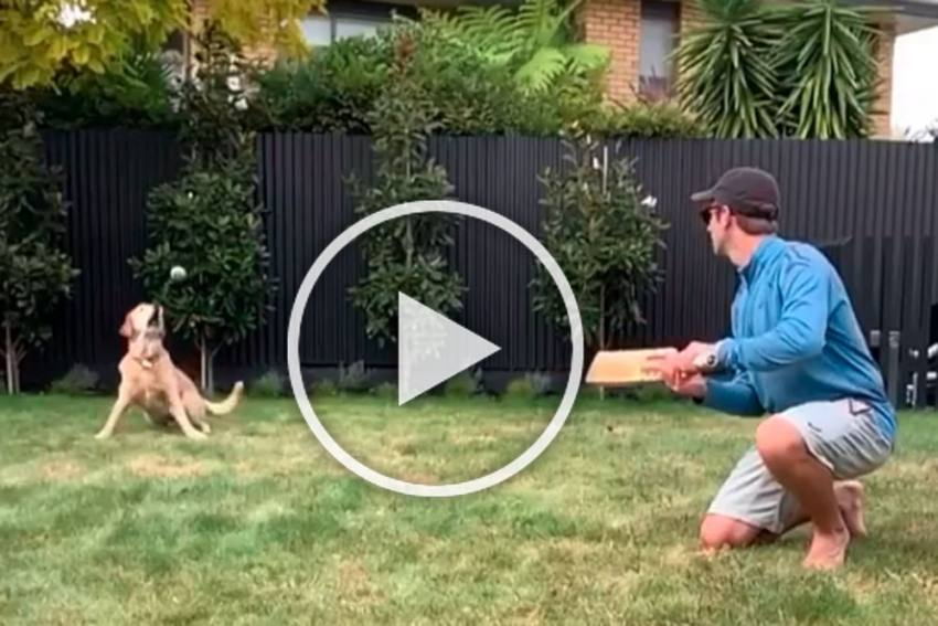 COVID-19: Kane Williamson Gives Pet Dog Slip Catching Practice - WATCH