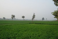 Ensuring Nutrition Through Proper Agriculture