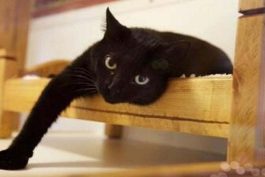 Two Cats In New York First Pets In US To Test Positive For Coronavirus
