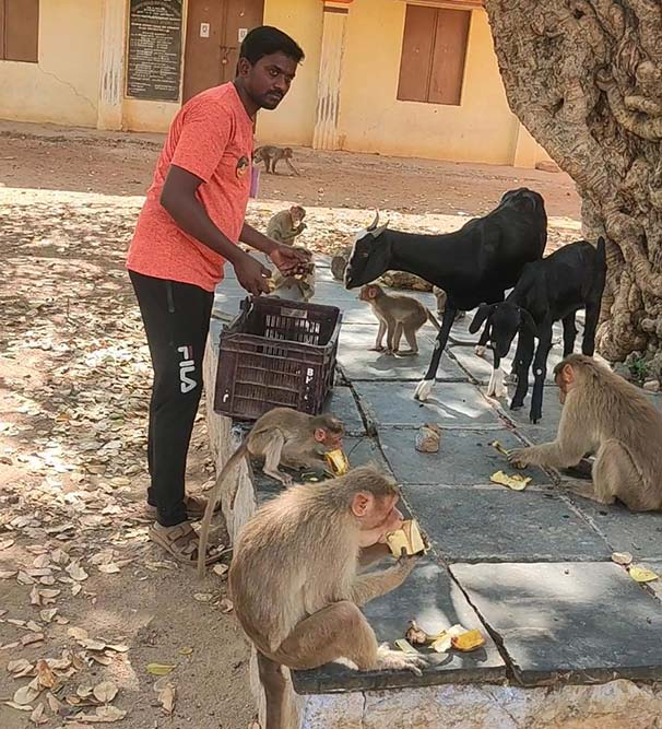 COVID-19 Good Samaritans: 1500 Starving Monkeys, Goats and Dogs Get A Meal A Day