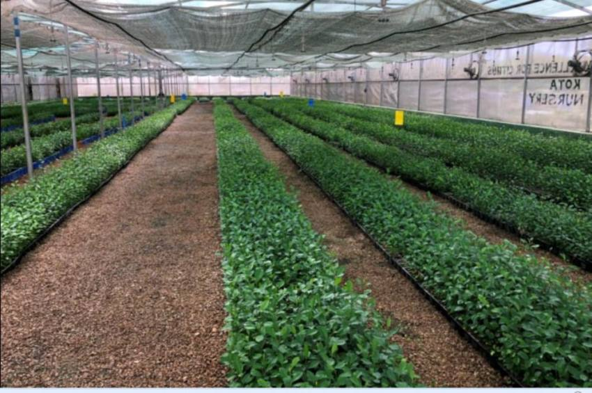 Indo-Israel Agricultural Project To Address COVID-19 Challenges Faced By Farming Sector