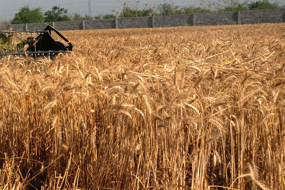 Coronavirus Puts India On Highway To Hunger: Despite Bumper Harvest Why Food Riots Lurk