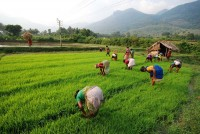 How A Proactive Kerala Government Prevented Coronavirus From Casting A Dark Cloud Over Kerala's Rice Bowl