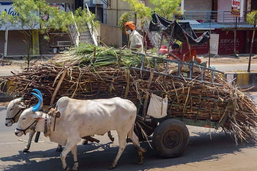 Corona In The Chambal, Corona In The Secretariat